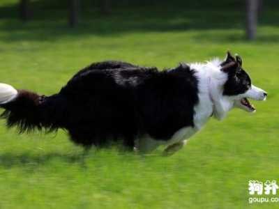 看门犬 最适合看门的4种中大型犬