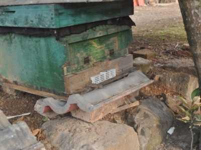 中蜂防盗蜂 用中蜂防逃防盗巢门控制器大大降低蜜蜂飞逃的几率