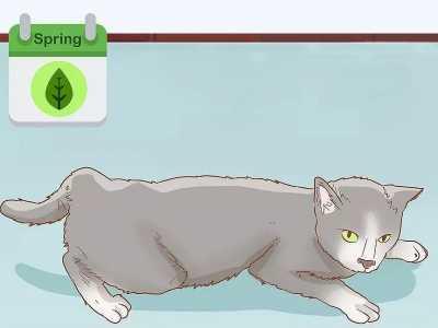 如何判断已怀孕 如何判断你家猫咪是否怀孕